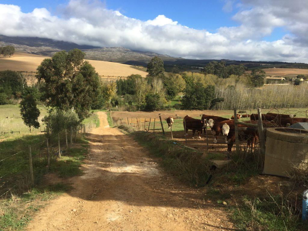 the road leading down from avondson towards underhill farm